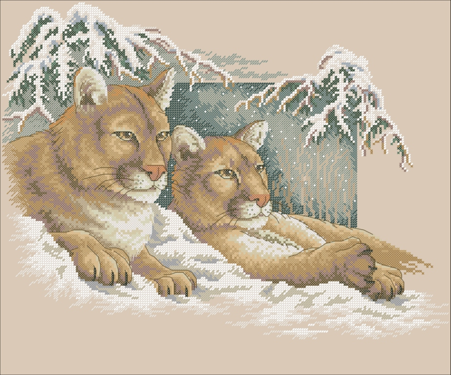 Snowy Cougars