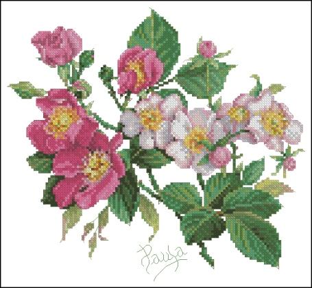 Wild roses (shipovnik)