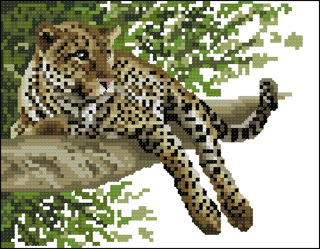 Safari Animals - Leopard