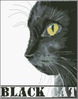 Le Chat Noir - Black Cat