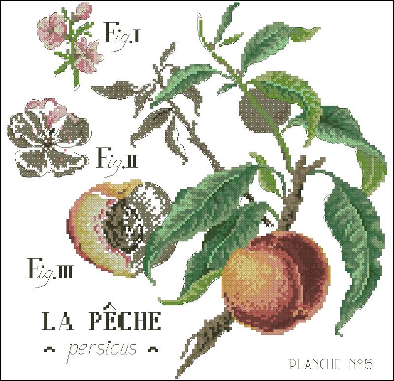 Персик вышивка бесплатно