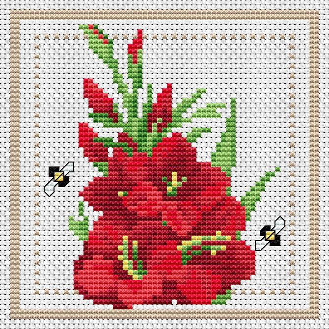 "August - ""Gladiolus"""